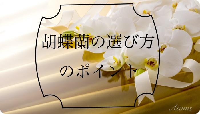 胡蝶蘭選び方