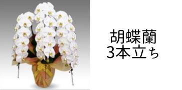 胡蝶蘭3本立ち
